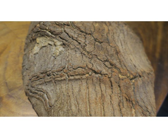 Cork (conch or couasse) fruit basket fruit tray in oak bark cork
