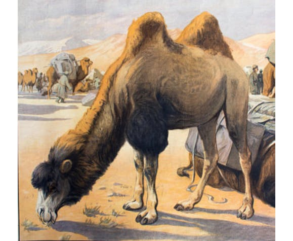 Educational camel poster 1891