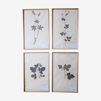French Herbarium