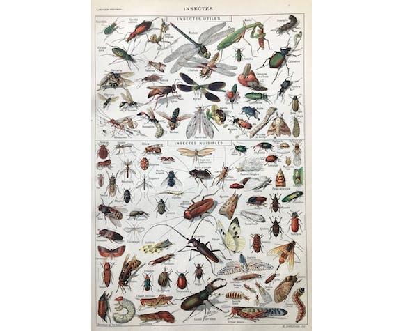 Planche botanique Insectes