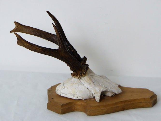 Deer massacre trophy