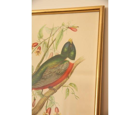 Gravure oiseau encadrée