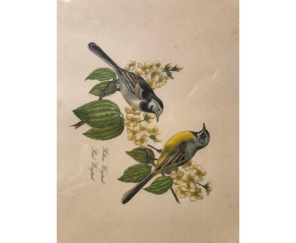 Gravure sous verre deux oiseaux wagtail