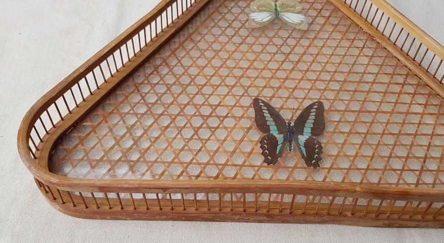 Plateau et sous-verres papillons