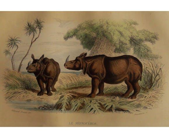 """Planche zoologique """" Rhinocéros """""""