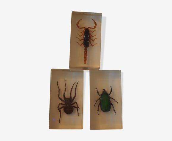 Lot d'insecte en inclusion résine 7cm/4 cm