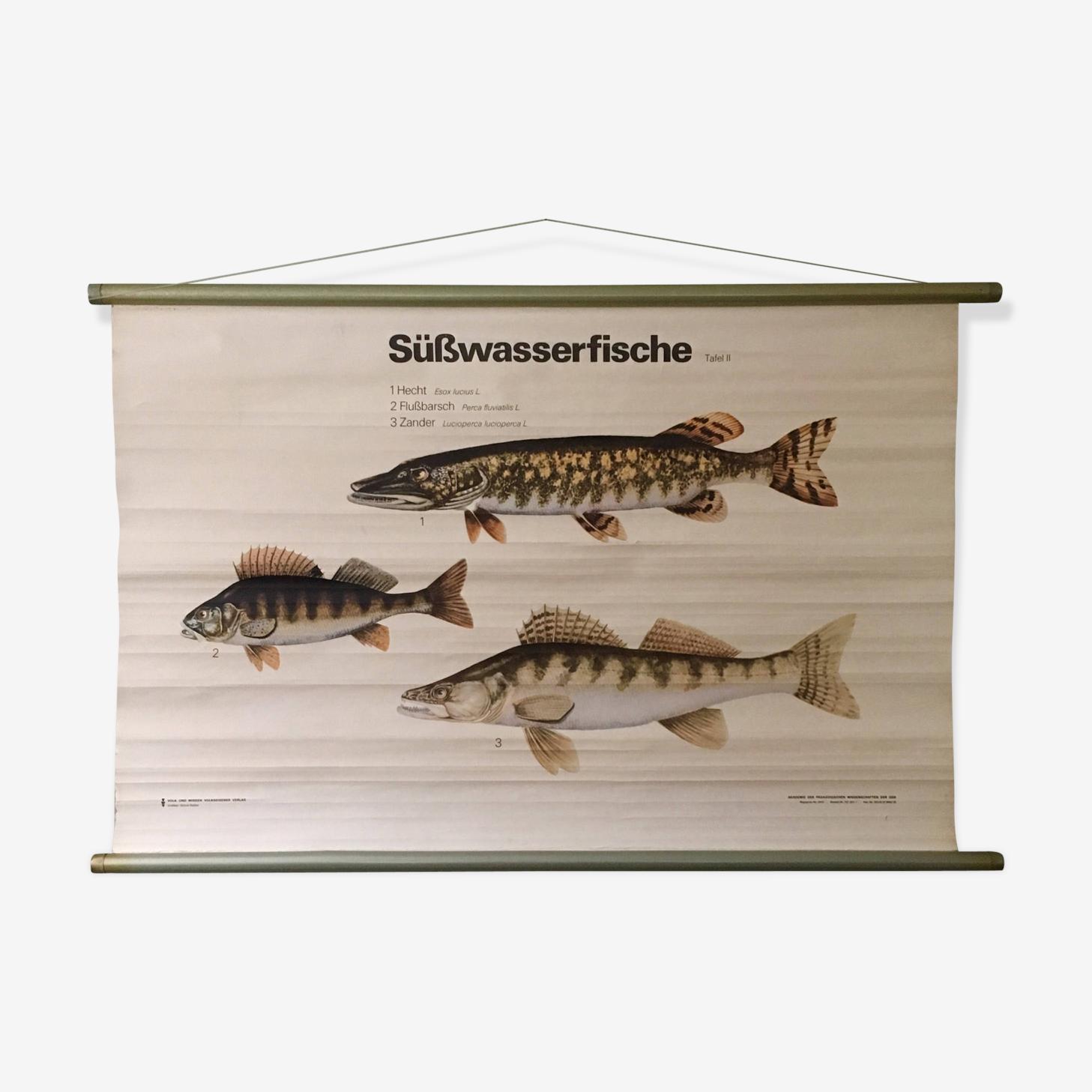 Affiche pédagogique poissons d'eau de mer