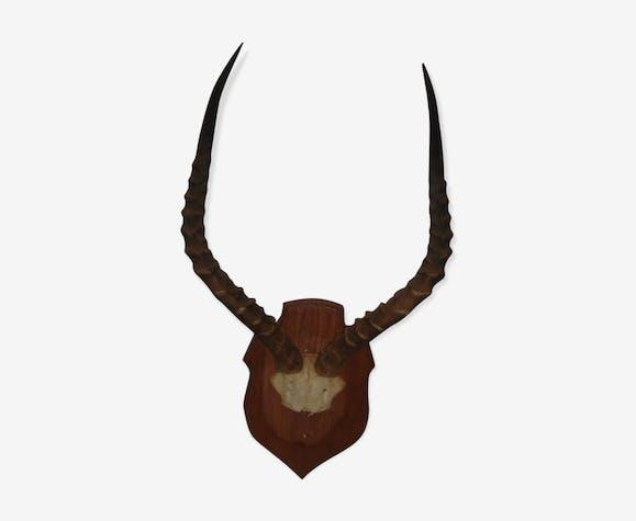 Massacre d'antilope d'Afrique