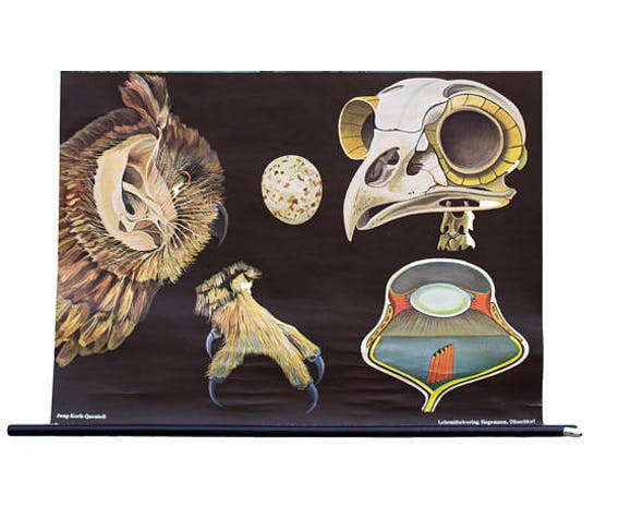 Educational poster Falcon and Owl 1969