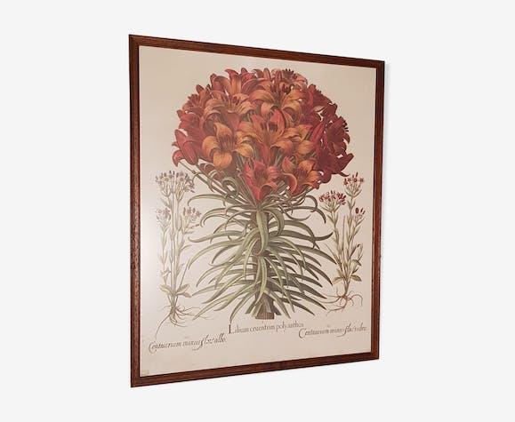Affiche botanique ancienne encadrée