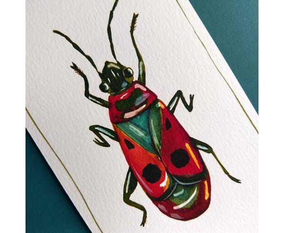Fire bug - série insectes - cabinet de curiosités