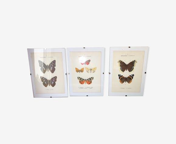 Ne datant pas de papillons