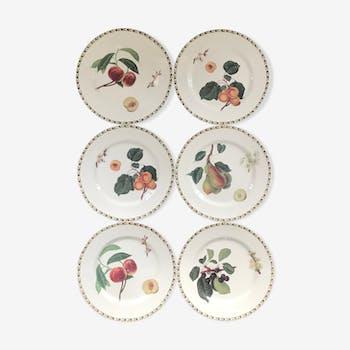 Lot of 6 plates botanical decoration
