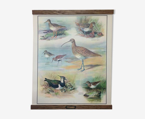 Birds of the marsh English school wall chart