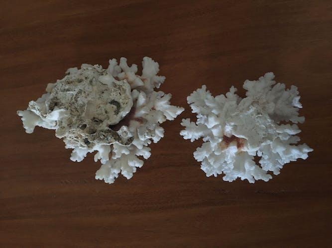 Lot de coraux blancs anciens