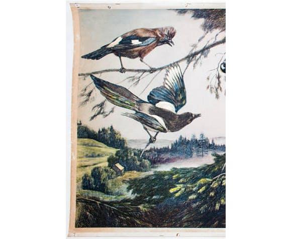 Birds, Educational Grid, F. Zerritsch, 1954