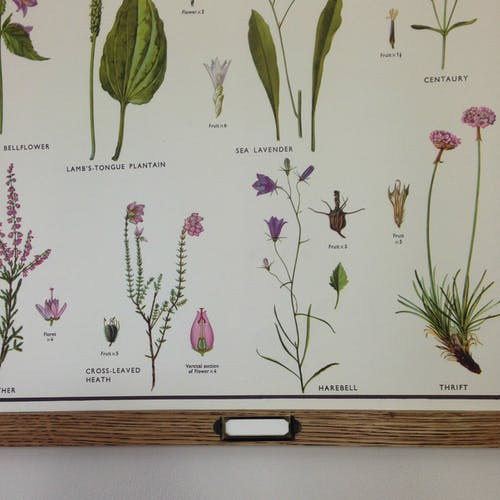 School poster of miscellaneous plant families IV