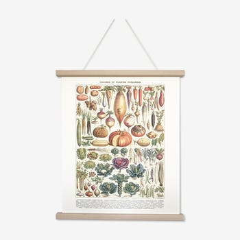 Board in colours representing the vegetables and vegetable plants