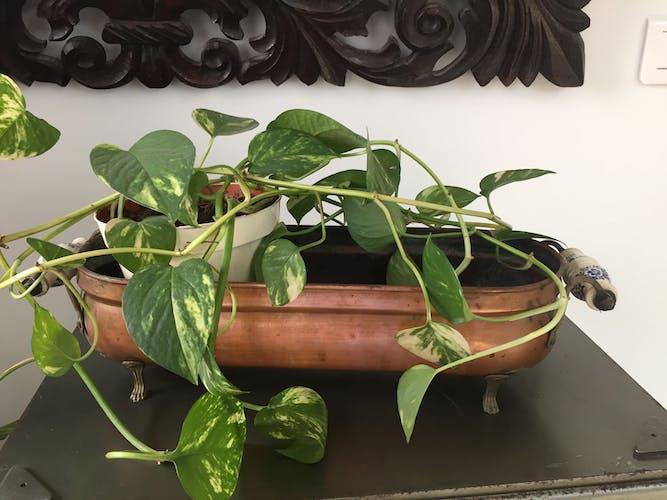 Jardinière ancienne en cuivre