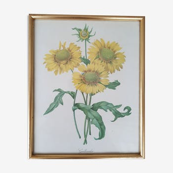 Illustration botanique vintage