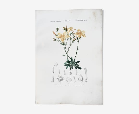 Botanical board