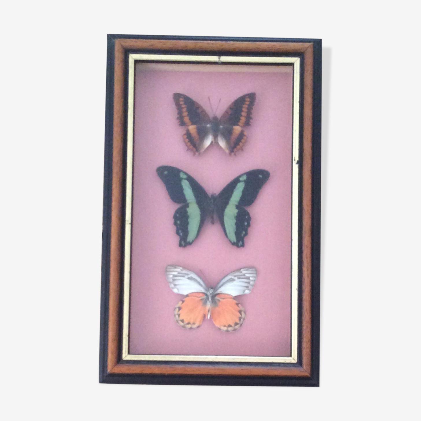 Framework butterflies under glass
