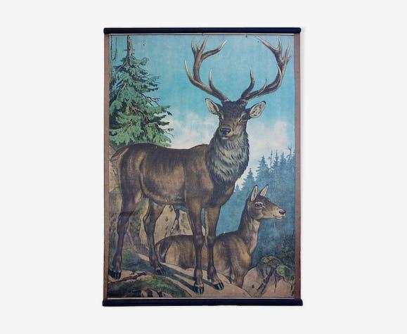 "Poster ""Deer"" educational rack 1891"