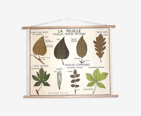 Affiche scolaire botanique Rossignol vintage