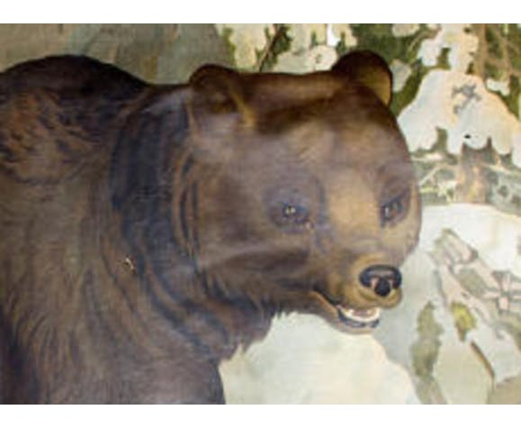 "Poster ""Bear"" educational rack 1891"