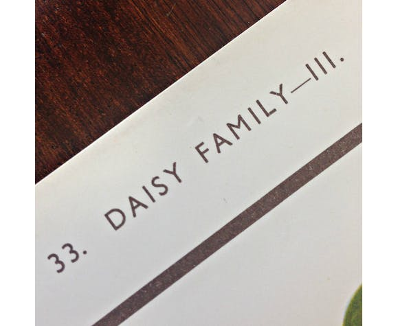School poster of daisy family flowers