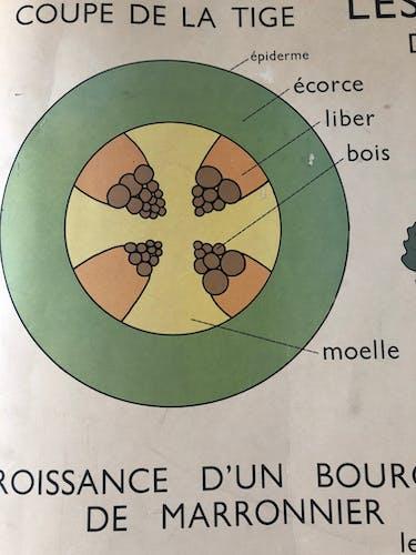 Affiche scolaire ancienne Rossignol N•5 et 6