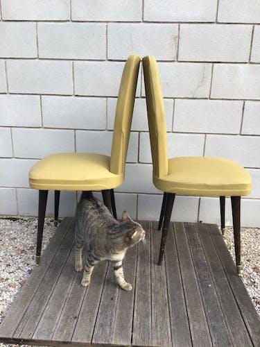 Paire de chaises moutarde pieds fuseaux
