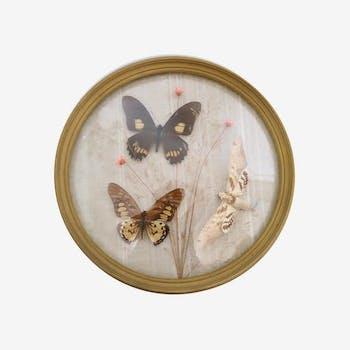 Cadre bombé avec papillons naturalisés