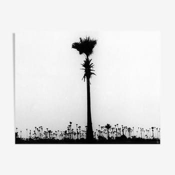 Palm tree, Bombay 70s