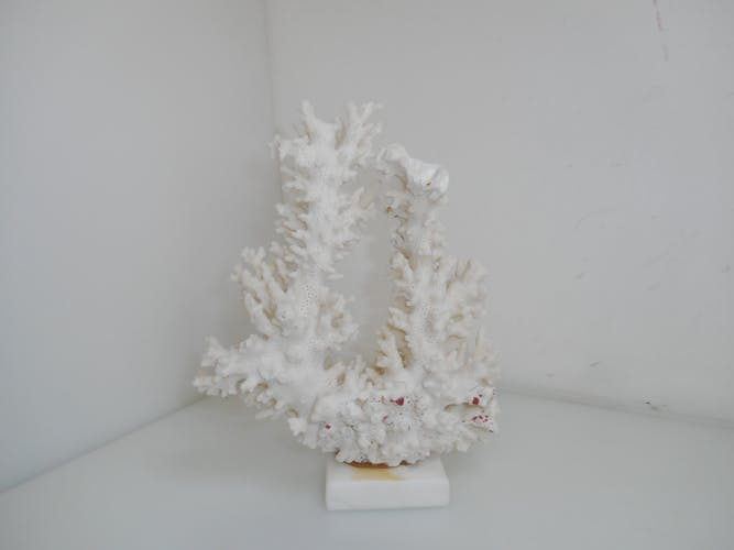 Natural white coral on marble base