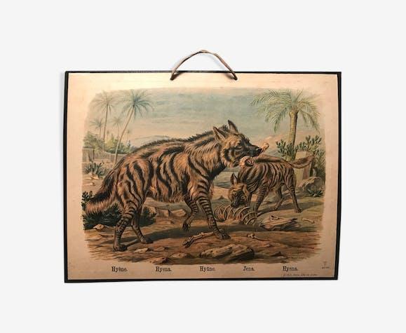 Affiche scolaire ancienne la hyène