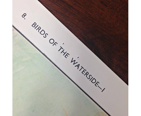 Birds of the waterside english school wall chart