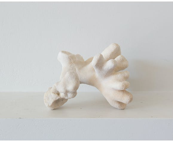 Corail blanc ancien