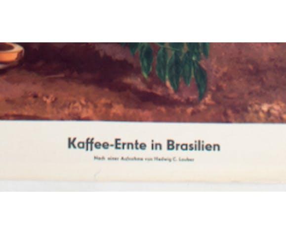 Harvest of coffee in Brasil, 1951