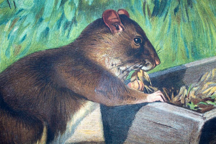 """Poster """"Mouse"""" educational graphic A. Wagner 1923"""