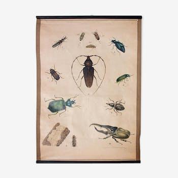 Affiche scarabée lithographie 1914
