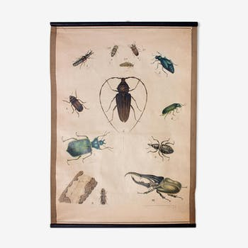 Poster beetle lithograph 1914