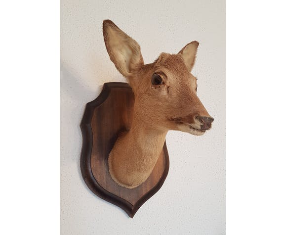 Naturalized doe head