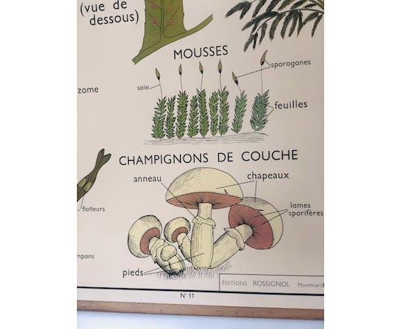 Affiche Scolaire ancienne Rossignol numéro 11