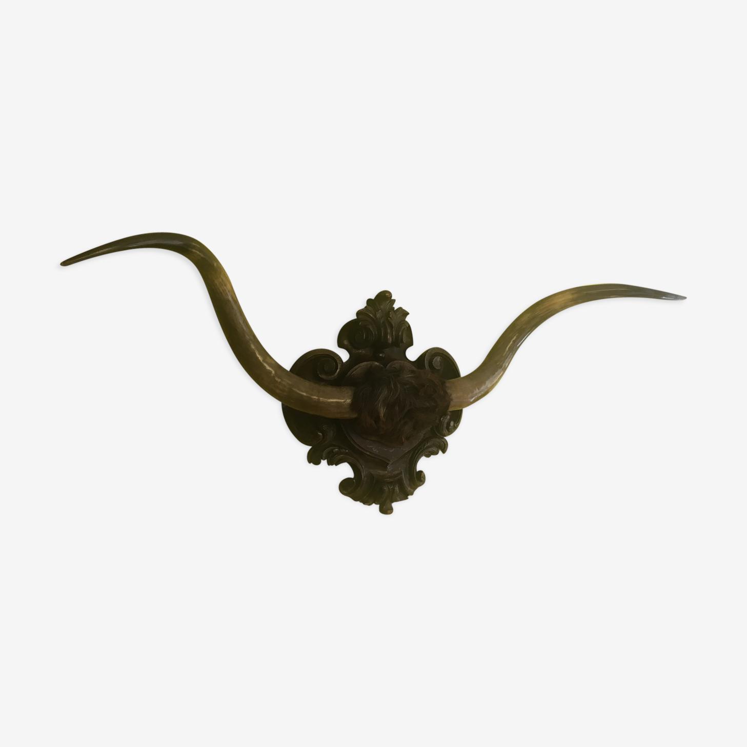 Trophy bull horns