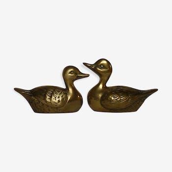 Duo de canards