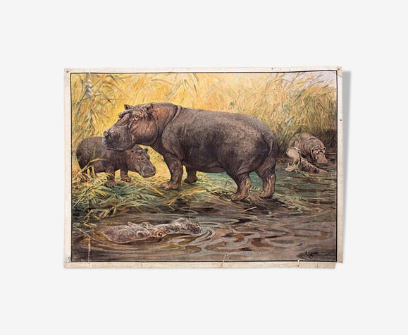 Hippo, educational grid, 1891