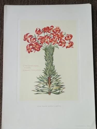 Lot de 6 planches botaniques
