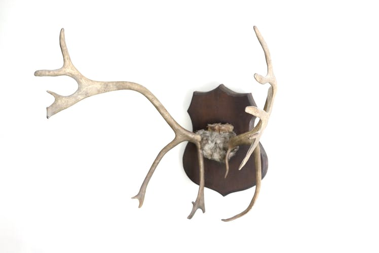 Bois de cerf muraux, années 60