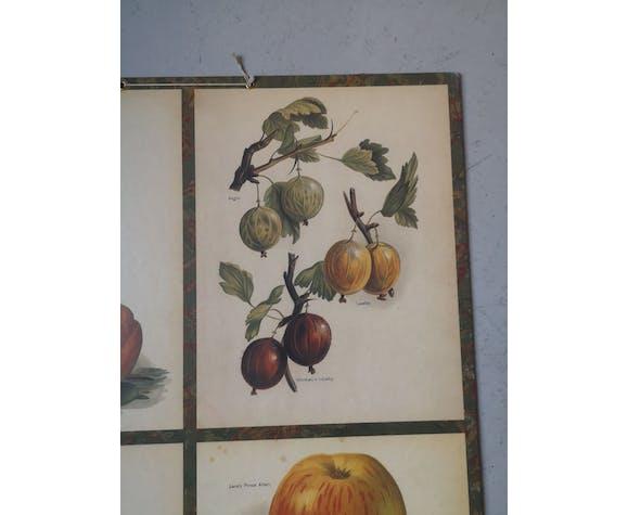 Affiche botannique vintage